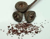 Семена эвкалипта прутовидного