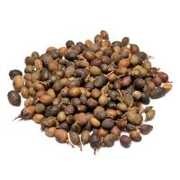 Семена лавра